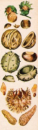 Орехи (рис. 2)