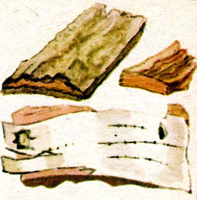 Кора (рис. 4)