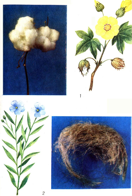 Таблица 3. Хлопчатник и волокна хлопчатника (1); лен и волокна льна (2)